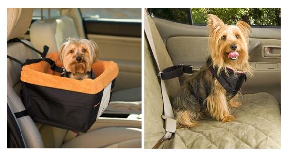 Transportar seu pet com segurança
