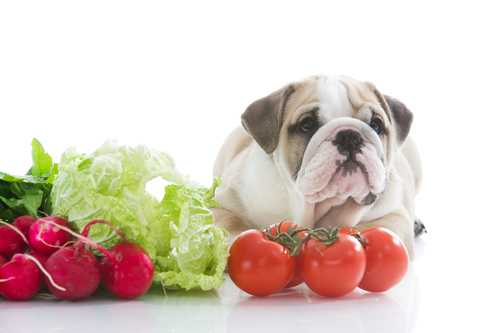 Dieta para pets
